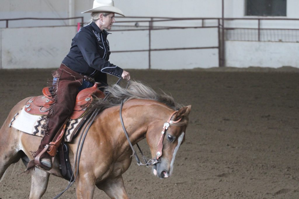 Buffalo Reining Events